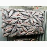 Продам оптом речную, озёрную рыбу