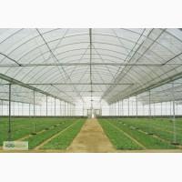 Строительство промышленннных фермесрких теплиц