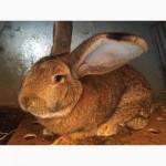 Племенные кролики различных пород