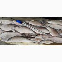 Рыба мороженная в ассортименте