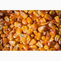 Кукуруза для пищевых производств