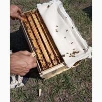 Реализация пчелопакетов доставка по всей России