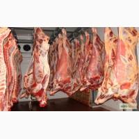 Срочный Выкуп Просроченного, Бракованного мяса говядины.Звоните