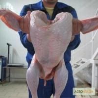 Эко-мясо индейки от производителя, р-ка Удмуртия. Разделка (охл/зам), полуфабриктаты