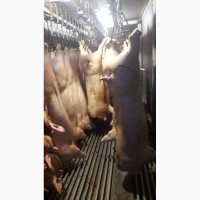 Свинина 160 р./кг