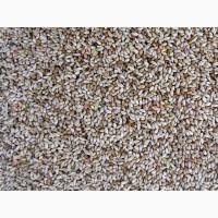 ООО НПП «Зарайские семена» закупает семена тимофеевки луговой
