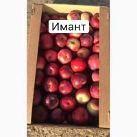 Яблоко с РБ