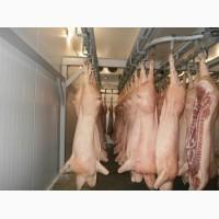 Свинина мясо - на экспорт