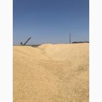 Ячмень фуражный от 5000 тонн (Казахстан)