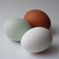 Инкубационное яйцо с Генофонда