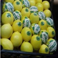 Лимоны, мандарины, апельсины. Цитрусовые из Турции