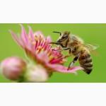 Пчелопакеты Великий Новгород, Новгородская область