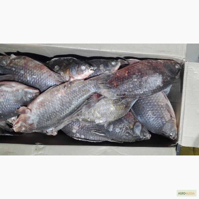 Купить рыбу в астрахане