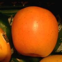 Продам Черенки плодовых деревьев новых сортов