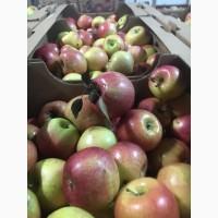 Яблоки Бребурн для общепита оптом