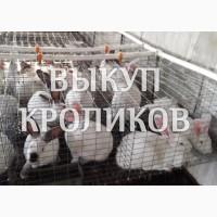 Купим кроликов живым весом