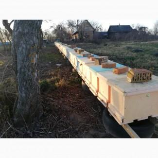 Пчелопакеты Карника Бакфаст