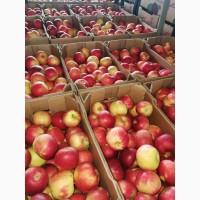 Продам яблоки Айдаред (македония) со склада в Москве