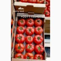 Продам томат изЕгипта