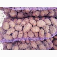 Реализуем картофель по Акции 15руб разные сорта