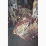 Продаем говядину п/т