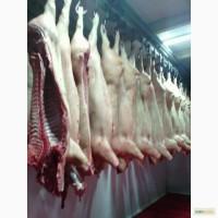 Свинина(товарка, мелковес, свиноматка)