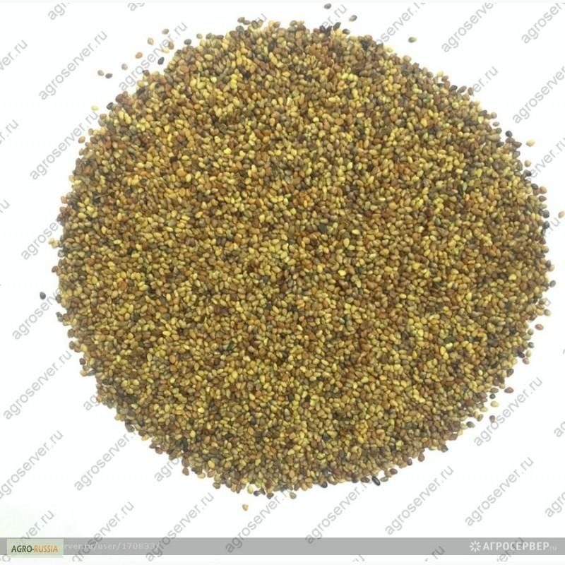 семена клевера фото