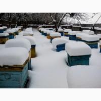 Карника и украинская степная, пчелопакеты в Курской обл
