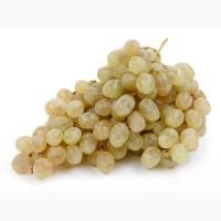Закупаем Виноград для социальных нужд эконом сегмента от 1 до 20 тонн на постоянной основе