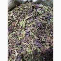 Душица обыкновенная резанная 20 мм под чай Алтай 2017 год (оптом от 5кг)