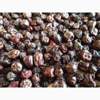 Продам сушеную черноплодную рябину черноплодку аронию