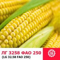 ЛГ 3258 (ФАО 250) гибрид кукурузы ЛИМАГРЕЙН (Limagrain)