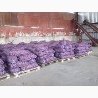 Картофель оптом со склада