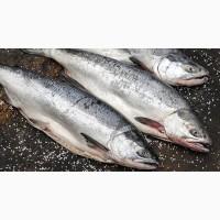 Рыба дальнего востока оптом