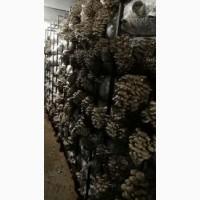 Продам грибную ферму по выращиванию вешенки, Воронежская обл