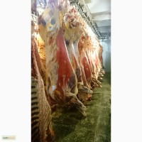 Мясо говядины KPC