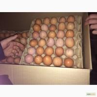 Яйцо куриное всех категории