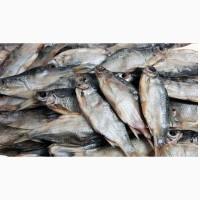 Продам оптом речную рыбу в ассортименте