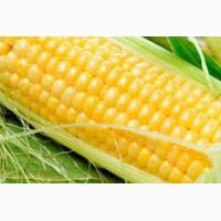 Семена кукурузы Краснодарский 291, 194