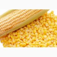 Куплю оптом кукурузу фураж на FOB Новороссийск и Астрахань