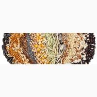Семена зерновых и зернобобовых культур