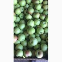 Яблоки Гала оптом