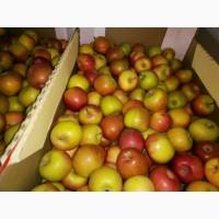 Яблоко Бребурн Сорт1 калибр 65-70 в картонном лотке 60х40, вес 13-15кг