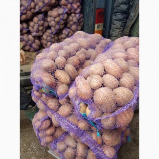 Акция картофел. Гала 6+ по 15 руб с доставкой