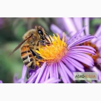 Пчелопакеты 2018