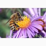 Пчелопакеты Тверь, Тверская область
