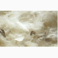 Перо водоплавающей птицы, белое, мытое, обеспушенное