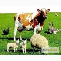 Продаются с/х животные в Орловской области
