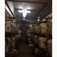 Продам комплекс оборудования цеха по выращиванию грибов вёшенка
