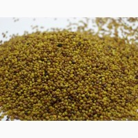 Семена клевера лугового (клевер)